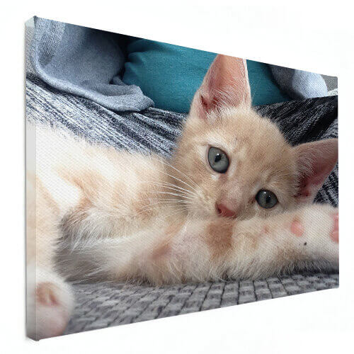 dierenfoto op canvas poes