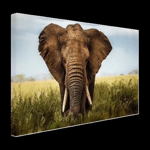 Olifant op canvas afgedrukt