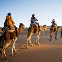 Vakantiefoto met kameel op canvas